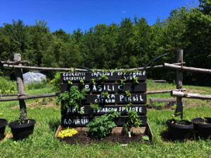 Fine herbs wall