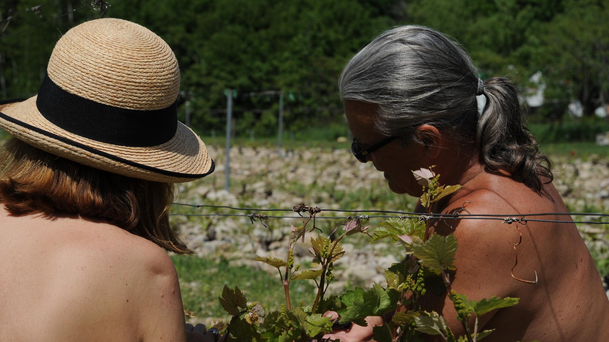 Taille des vignes au vignoble en couple