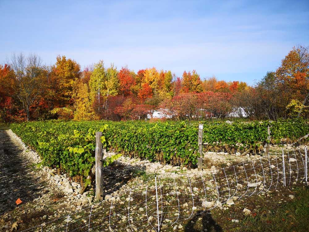 Photo du vignoble prise le 21 octobre 2019